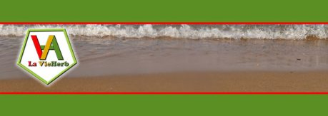 cropped-header-image_22.jpg